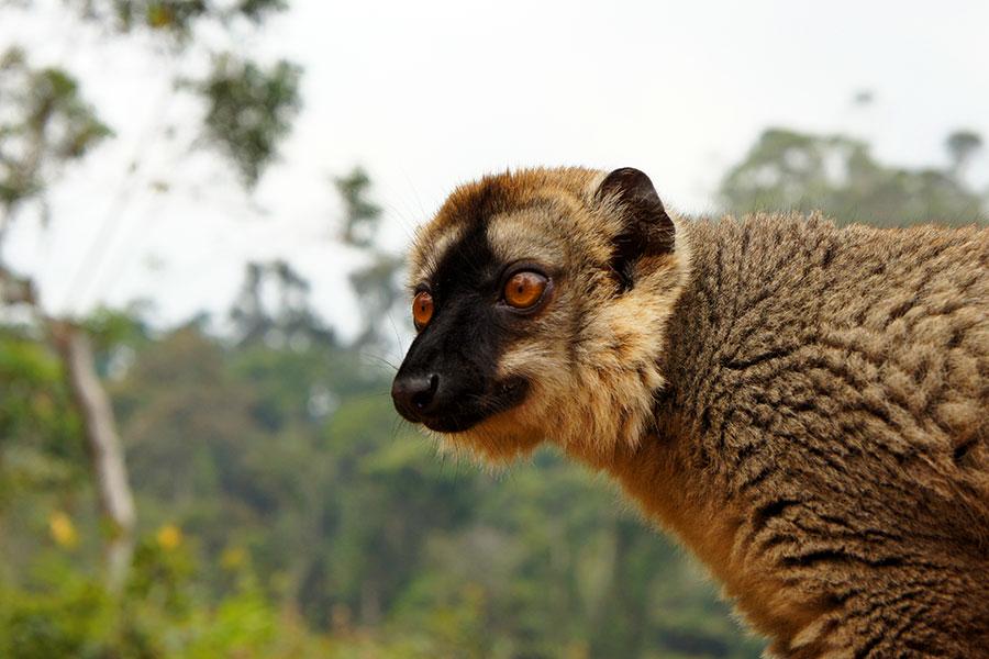 20 tierische Begegnungen während unserer Reisen 9
