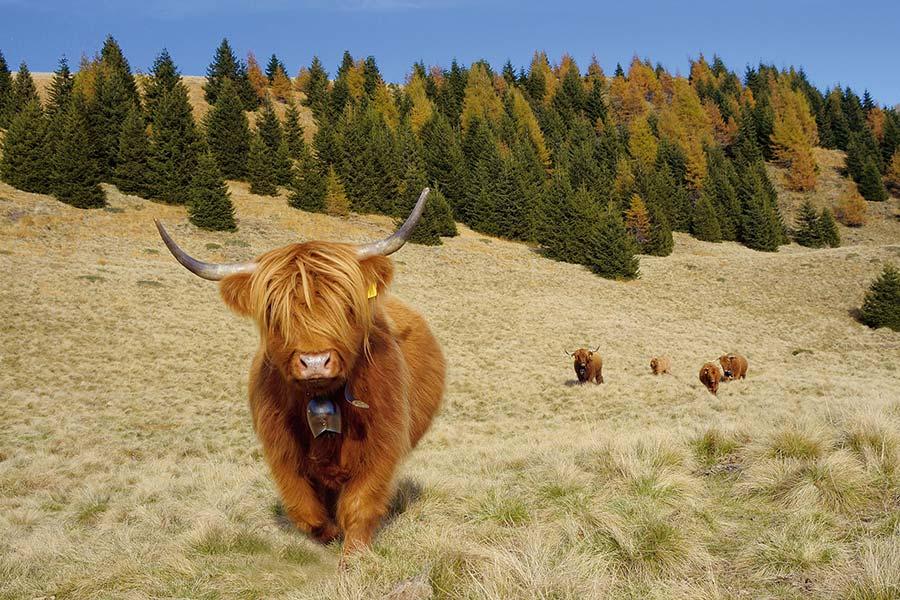 Tessin: Zu Besuch bei Betsy auf der Alp 3