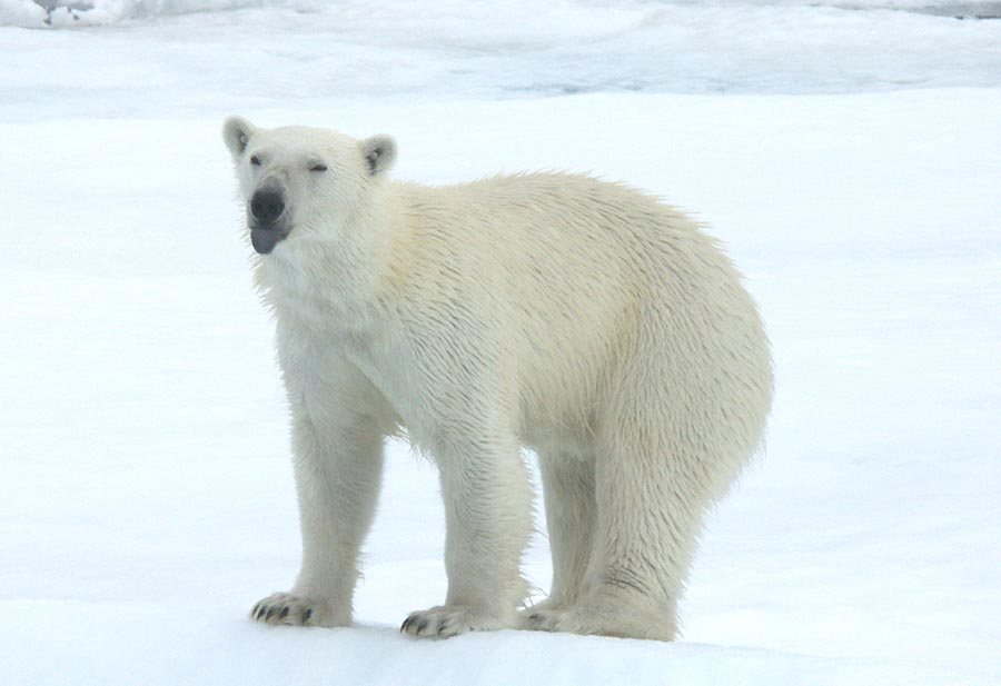 Spitzbergen: Faszination im Eis 8
