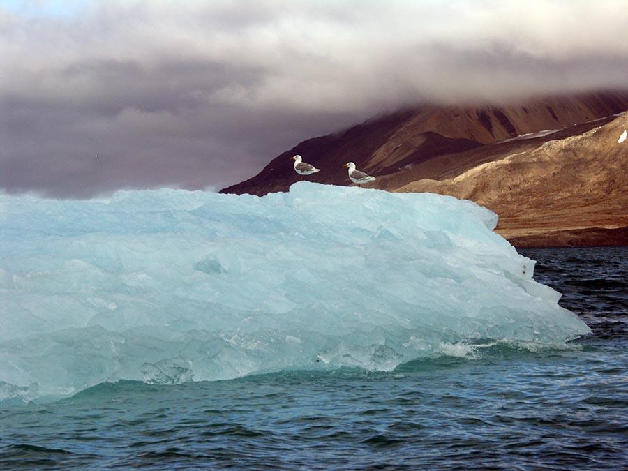 Spitzbergen: Faszination im Eis 6
