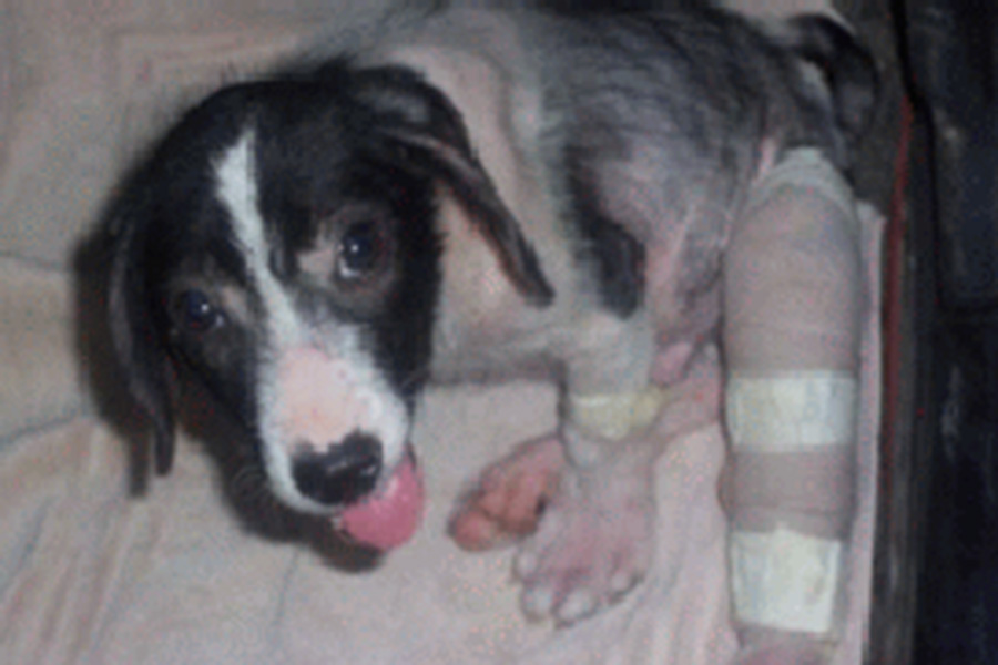 Tierhilfe Tirana