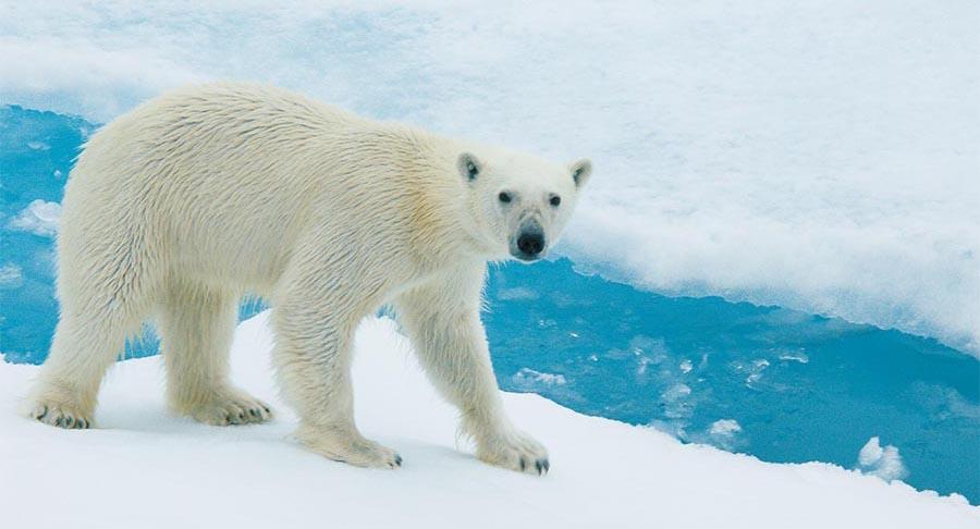 Arktis – Antarktis: die Unterschiede 2