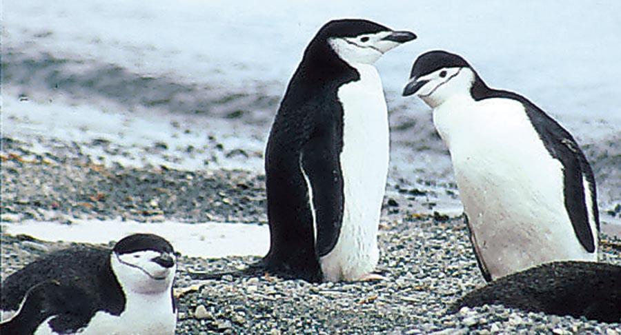 Arktis – Antarktis: die Unterschiede 3