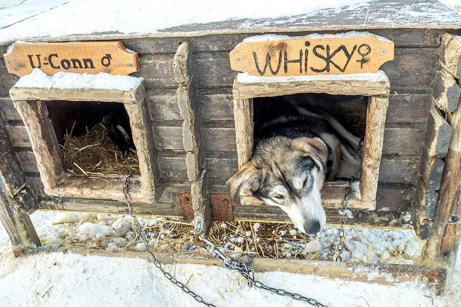 Kirkenes, Snowhotel, Husky Whisky