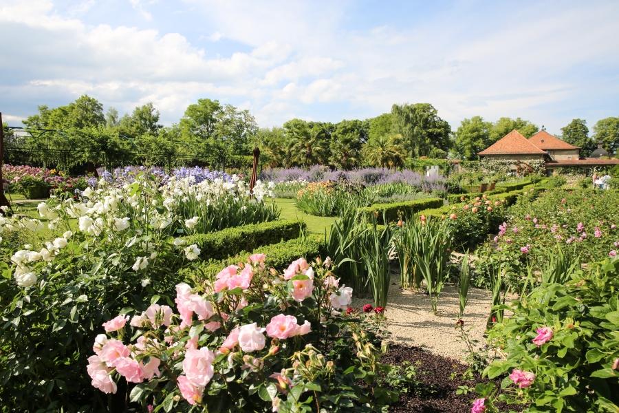 Jardin des Irisi Vullierens