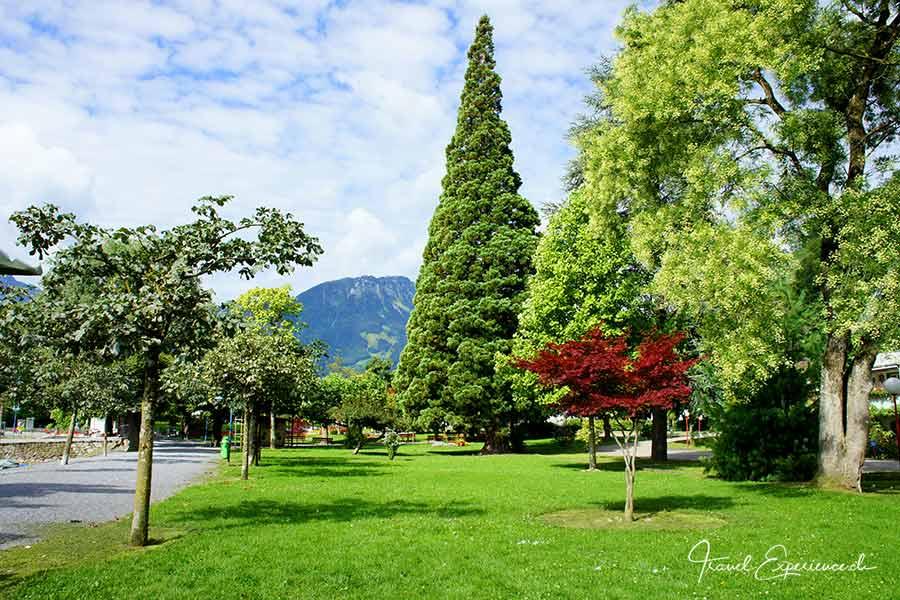 Weesen, Sequoia