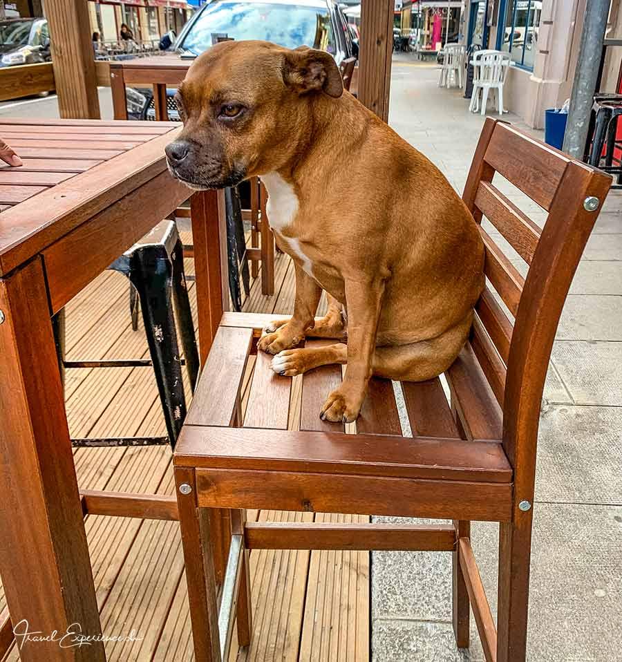 Hund, Bar, Genf