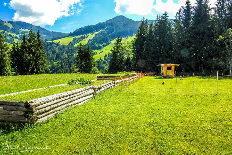 Haas Kräutergarten, Hochbeete, Wildschönau