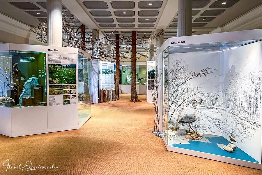 Kloster Disentis, Naturmuseum