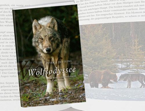 Wolfsodyssee – Reise ins verborgene Reich der Wölfe