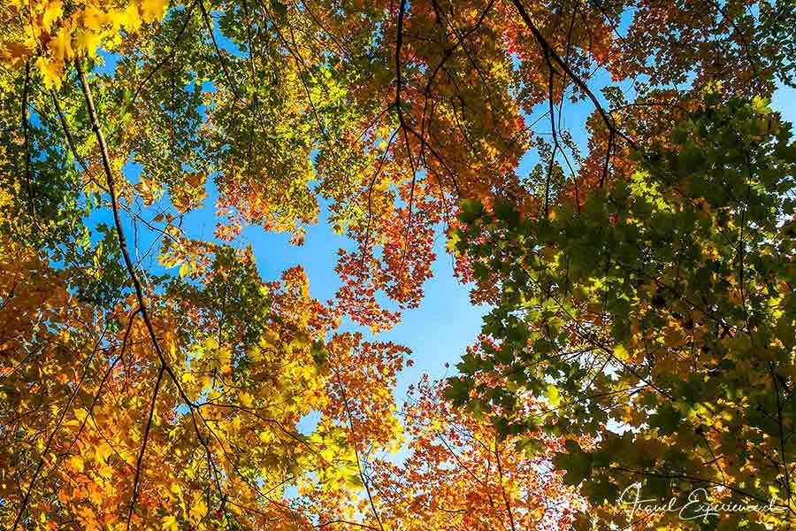 Michigan Upper Peninsula, Herbstlaub, Foliage