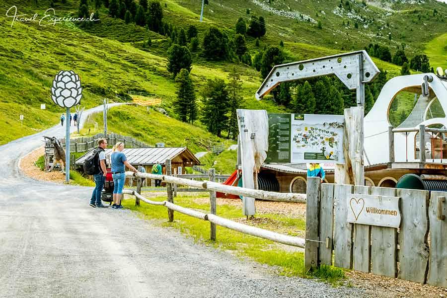 Tirol, Pitztal, Hochzeiger, Zirbenpark
