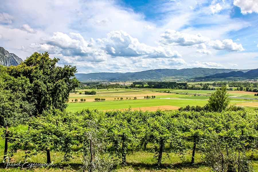 Slowenien, Vipava, Weingegend