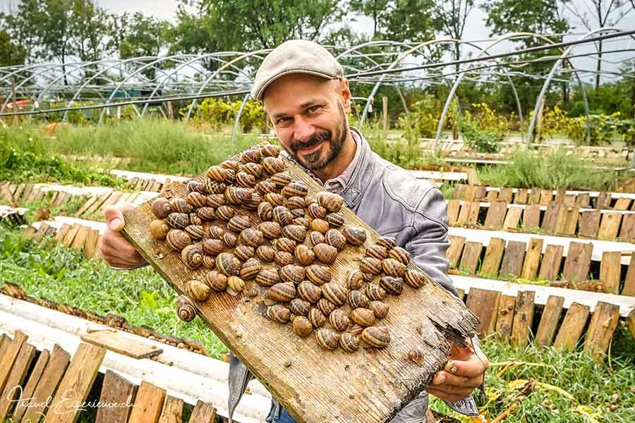Andreas Gugumuck zeigt seine Zuchtschnecken