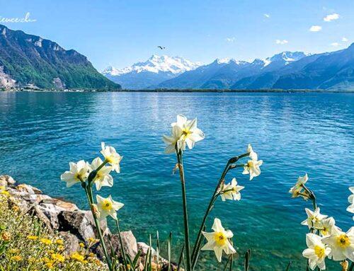 Infos zu Montreux Riviera